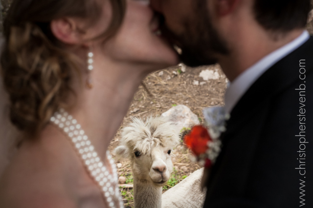 I migliori photobomber ai matrimoni (11)