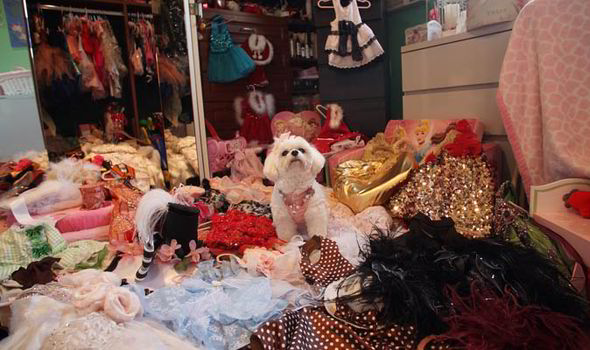 Lascia in eredità 1 milione di sterline al cane invece che ai due figli (2)