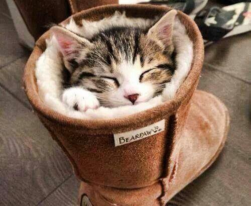 gatto nello stivale