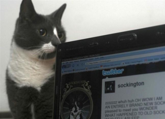 Sockington-twitter