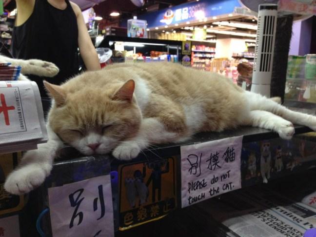 Tsim-Tung-Brother-Cream