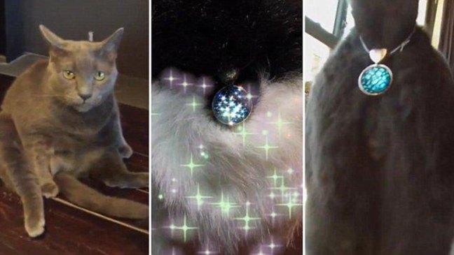 Twinkle Tush, il gioiello che coprirà il didietro dei vostri gatti