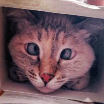 gatto strabico