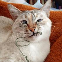 gatto strabico2