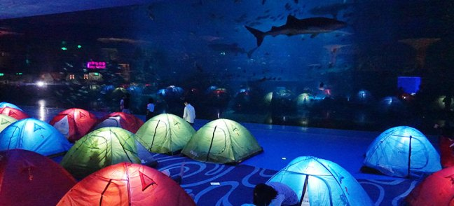 Ocean Kingdom acquarium7