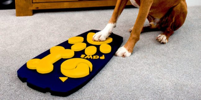 In arrivo il primo telecomando dog-friendly per cani