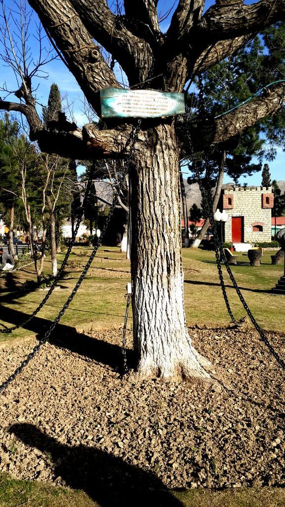 In Pakistan c'è un albero di baniano in arresto dal 1898