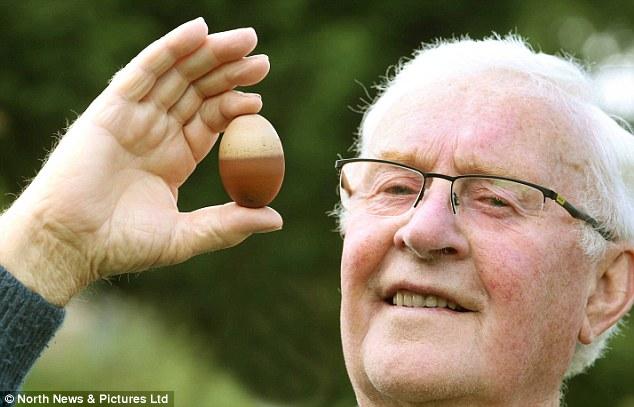 Gallina del Regno Unito fa un uovo bicolore