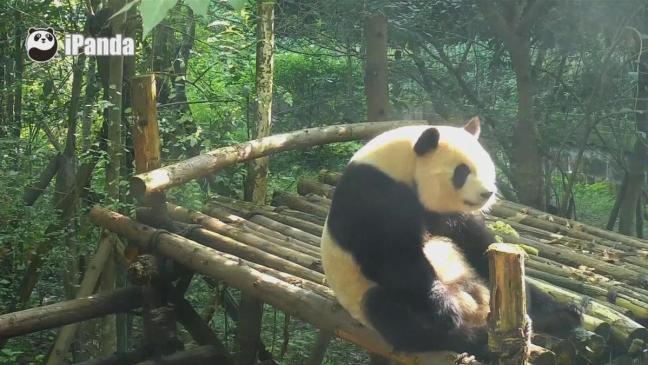 video-panda-addominali