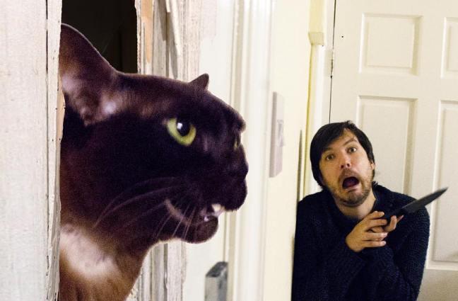 Ricrea scene famose di film con il proprio gatto