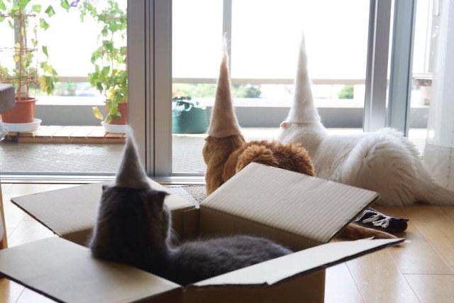 gatti-cappelli-pelo-2