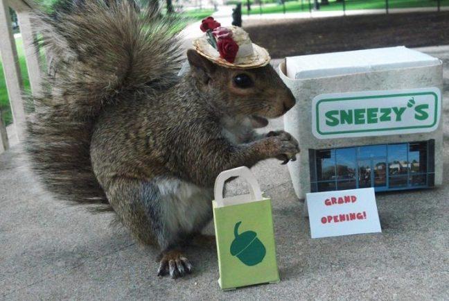 scoiattolo-cappello-foto