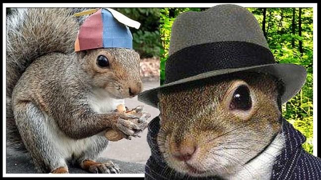 sneezy-scoiattolo-foto