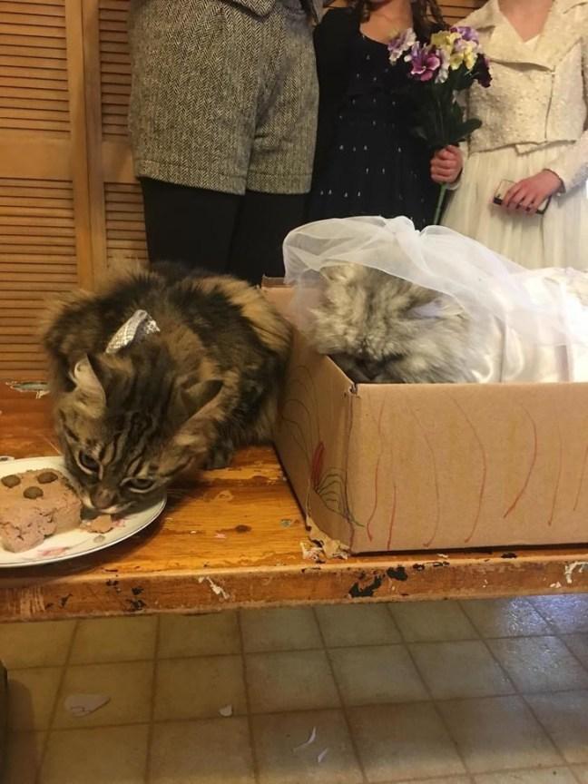matrimonio-gatti