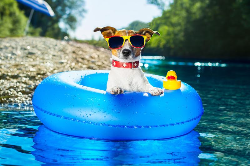 10 ingegnosi e assurdi rimedi contro il caldo