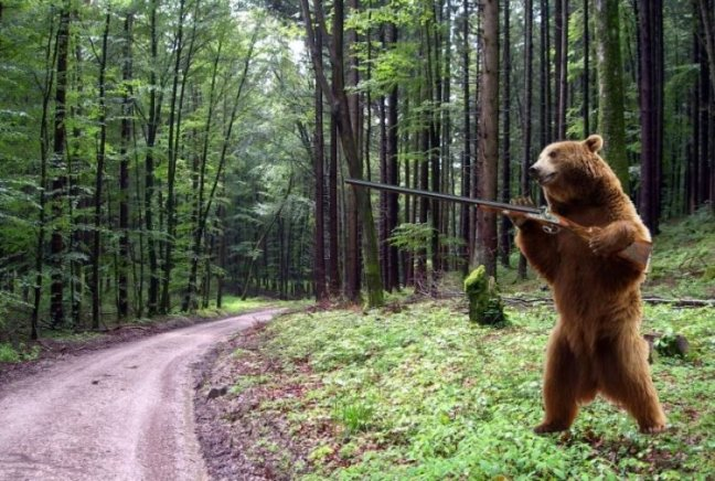 orso-armato-di-fucile