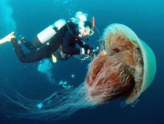 medusa-gigante-criniera-di-leone