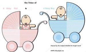 The Difference between the Urine of a Baby Boy and a Baby Girl