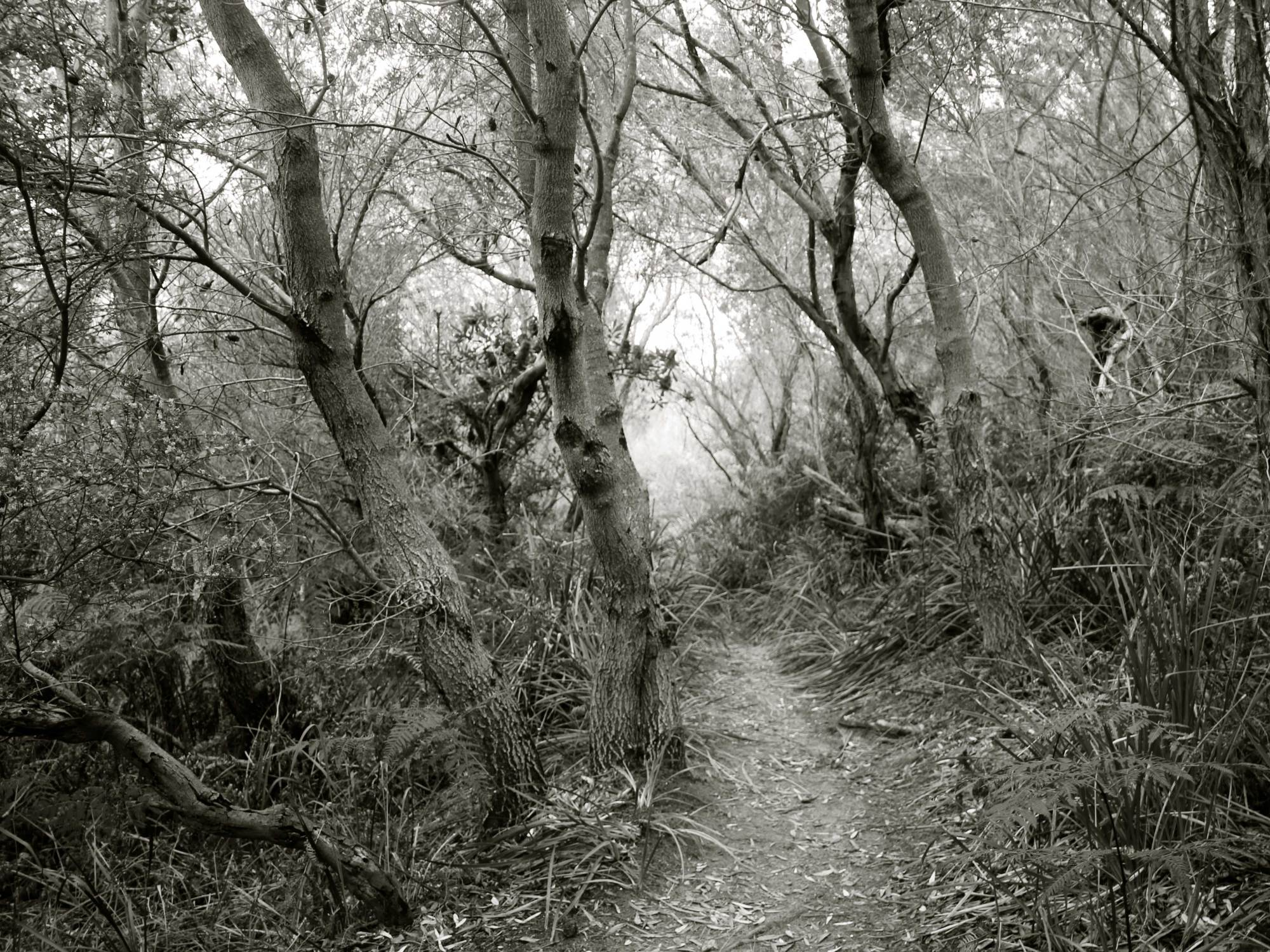 Fairytale Forest, Black and White, Photography, Nature / Abundance of Lovely
