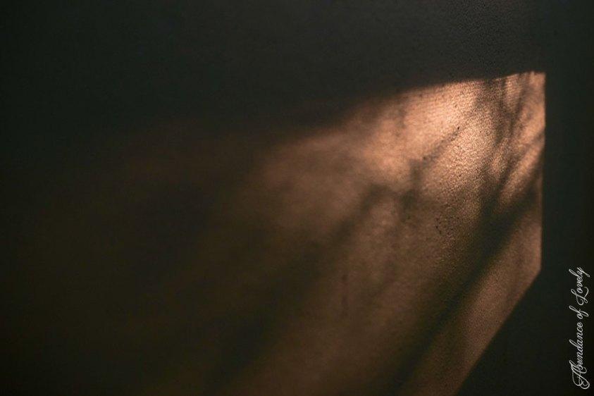 The dark days when light filters through shade