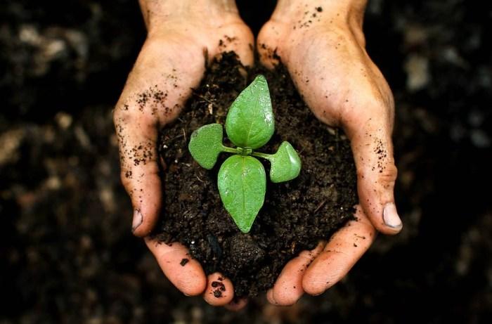 Kandungan Makro Tanah