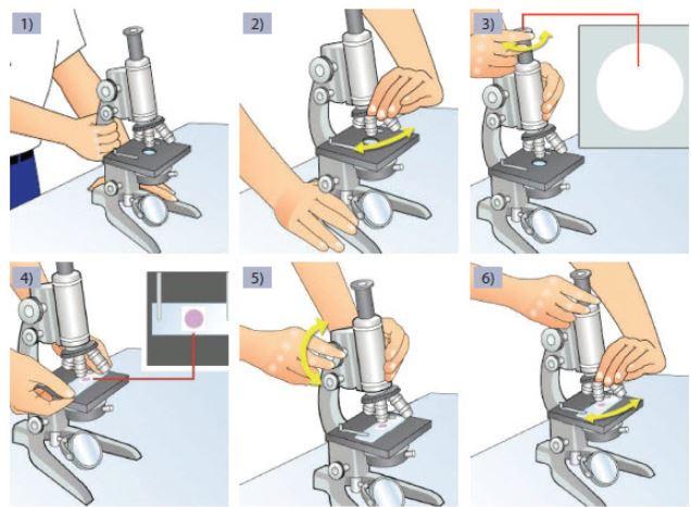 Cara Menggunakan Mikroskop
