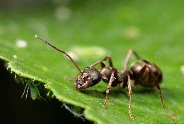 contoh deskripsi hewan semut