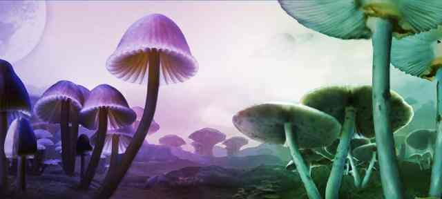 psilocybin-magic-mushrooms-forest