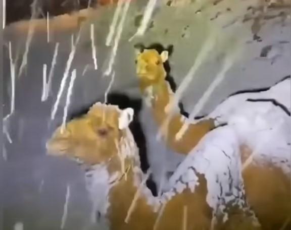 sníh saúdská arábie