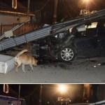 9 promile nehoda