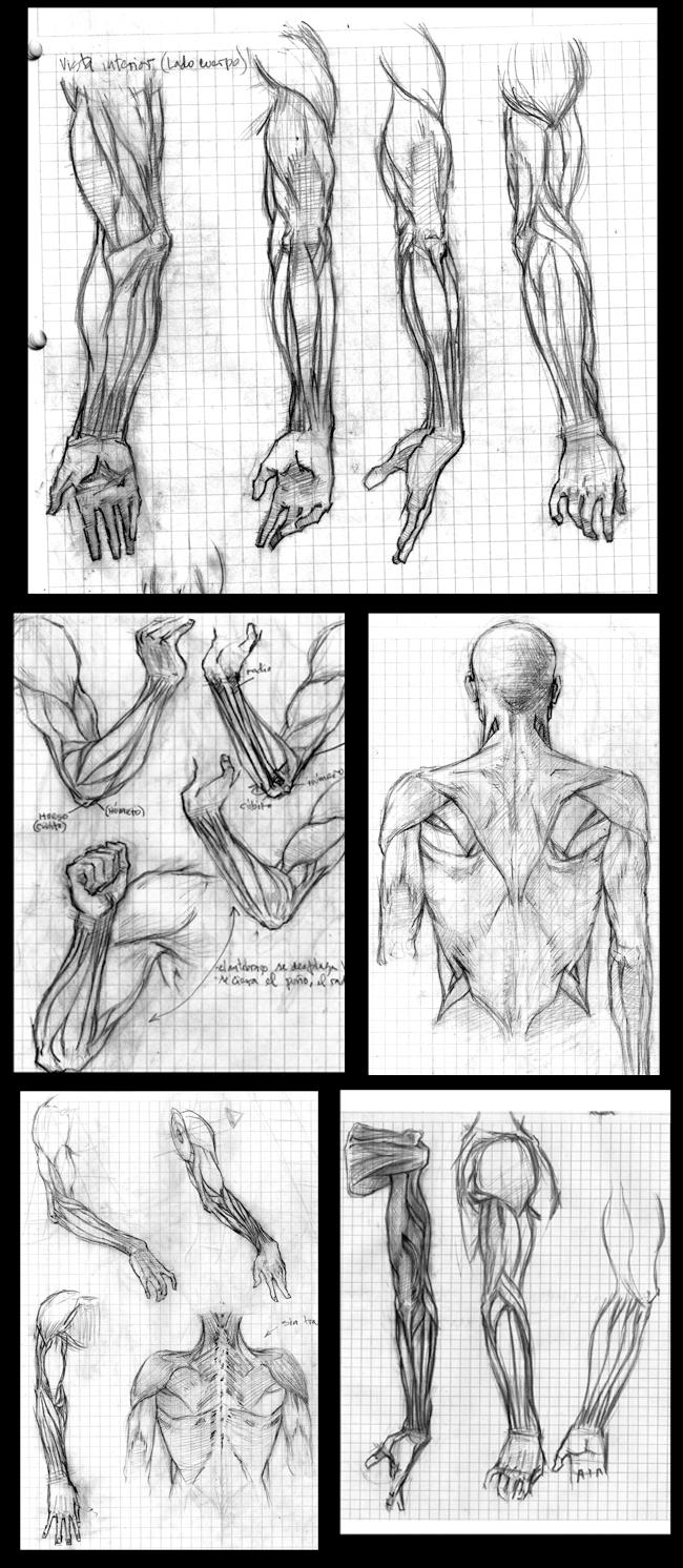 Apuntes de anatomía en Academia C10.