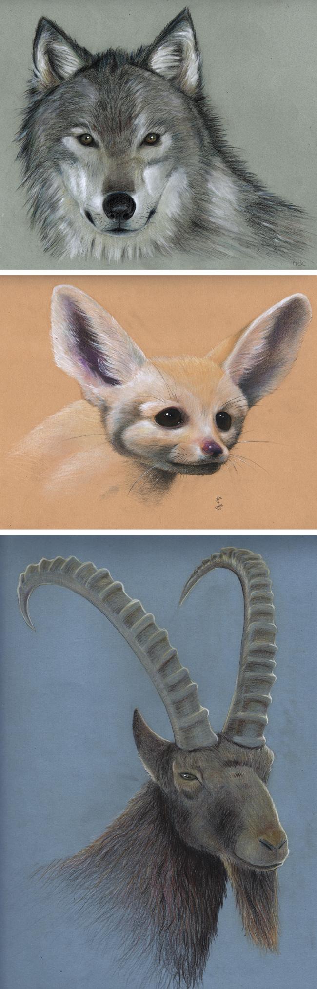 animales-trabajos-alumnos-masterc10-ilustracion-lapices-madrid-academiac10