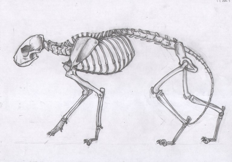trabajos-alumnos-curso-comic-sabados-dibujo-anatomia-animal-humana-comparada