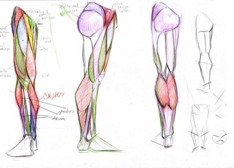 documentacion_anatomia_humana_curso_dibujo_profesional_academiac10_madrid2