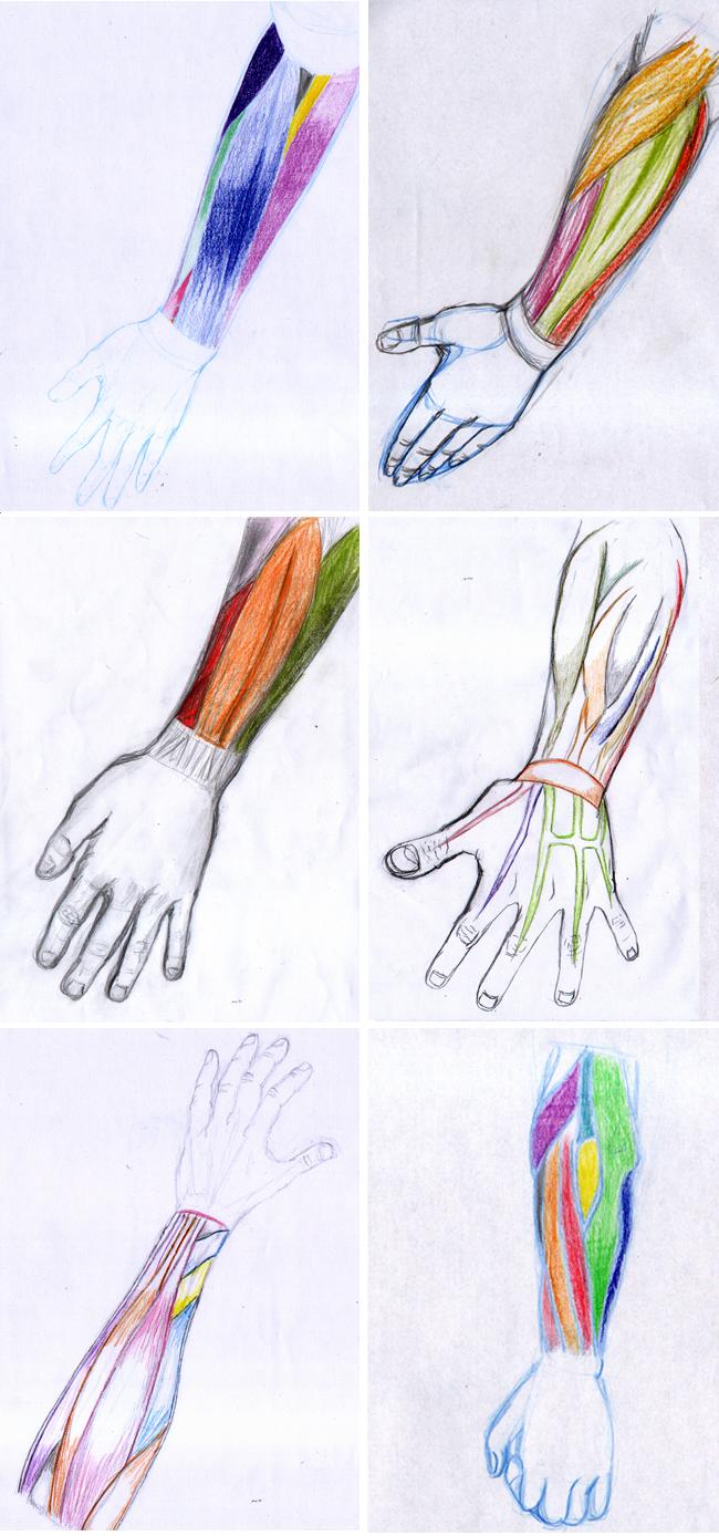 ejercicios-anatomia-cuerpo-humano-dibujo-curso-comic-madrid-academiac10