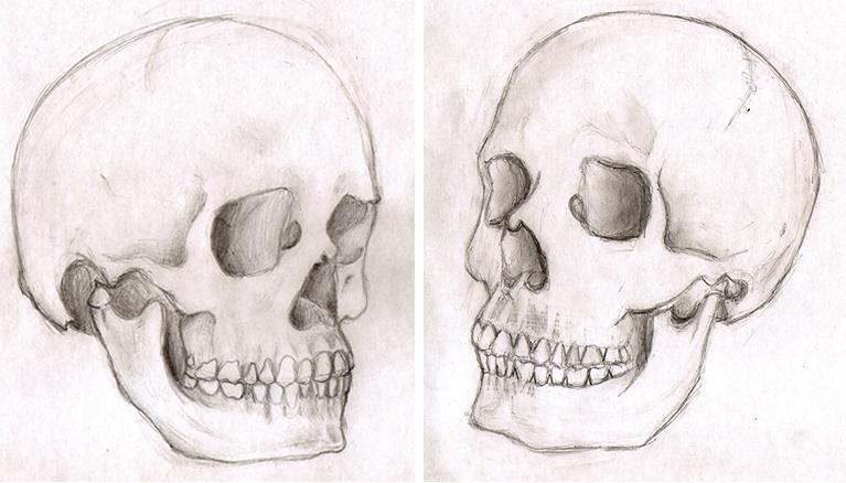curso-dibujo-comic-sabados-anatomia-humana-estudio-craneo - Cursos ...