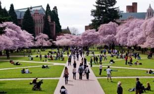 universitas di amerika serikat University of Washington