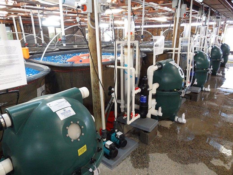 prospek kerja jurusan perikanan teknologi perikanan laut