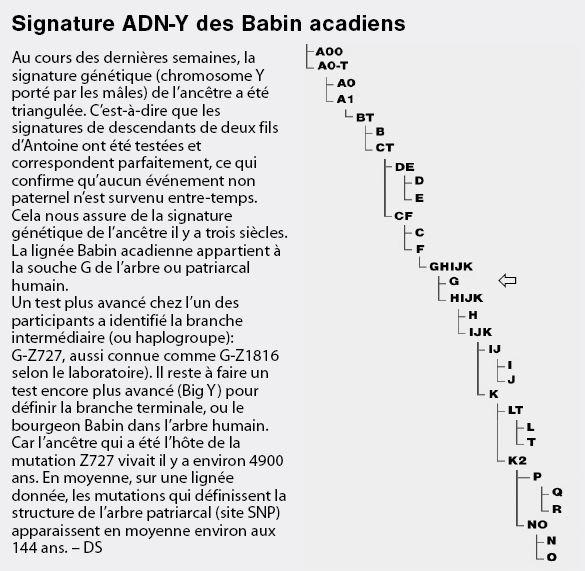 adn_babin