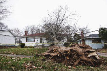 Cet abre est tombé sur le toit d'une maison de l'avenue Bissett à Moncton. - Acadie Nouvelle: Patrick Lacelle