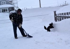 Jean-Guy Hébert, de Caraquet, déneige sa cour en compagnie de sa chienne, Buddy.-Acadie Nouvelle: David Caron.