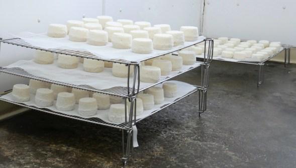 Les fromages doivent passer plusieurs jours en salle d'affinage. - Acadie Nouvelle: Simon Delattre