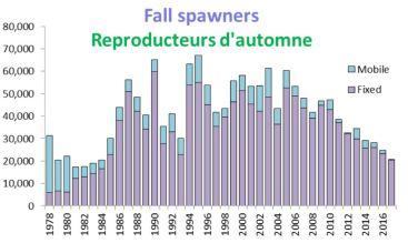 Les débarquements du hareng d'automne sont en déclin dans le golfe du Saint-Laurent depuis le début des années 2000. - Gracieuseté