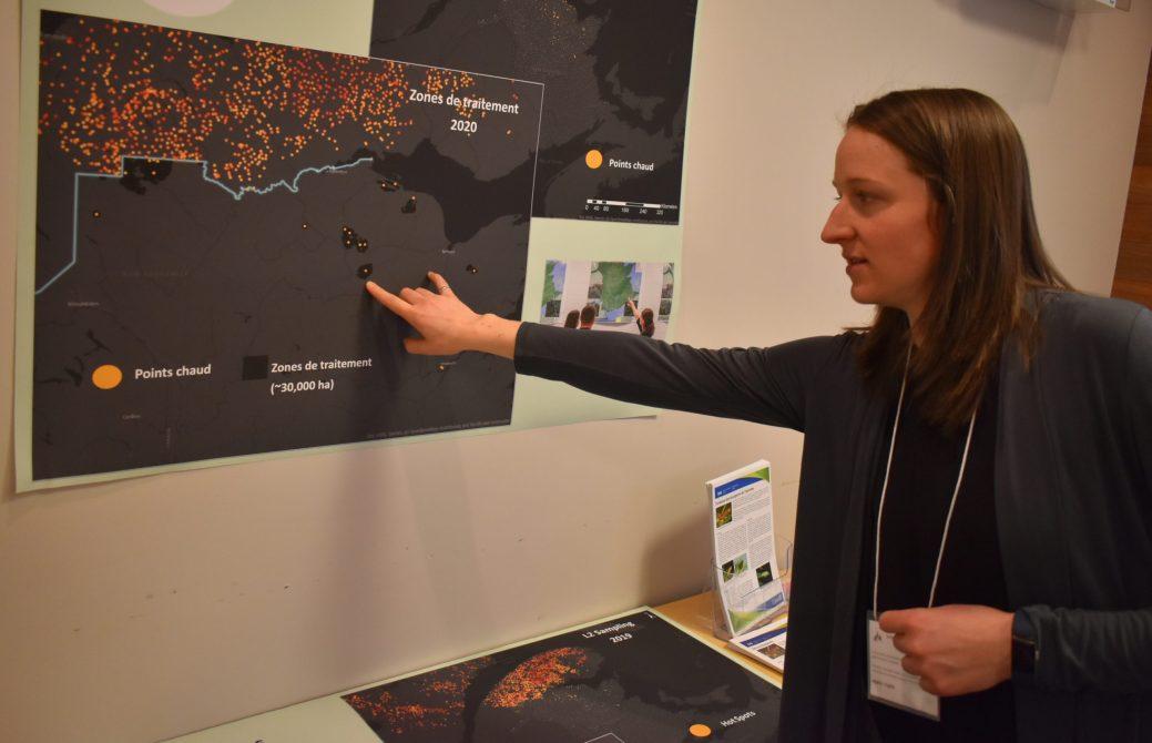 Emily Owens montre où se trouvent les zones à risque au Nouveau -Brunswick (points rouges), donc où auront lieu les traintement cette année. En haut de la frontière (ligne bleue), on peut constater toute l'ampleur du territoire gaspésien affecté par la tordeuse. - Acadie Nouvelle: Jean-François Boisvert