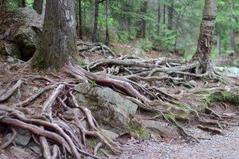 Au pied des chutes Maggie's Falls. - Acadie Nouvelle: Simon Delattre