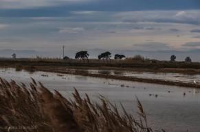 Delta del Ebro - María Lorenzo Real