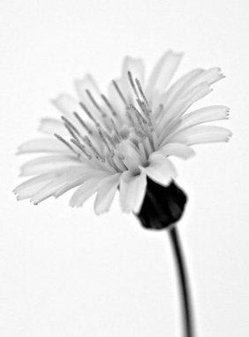 Flor de enero - Ramón López Heredia