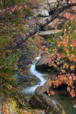 Fluye el otoño - Santi Pedro