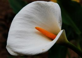 La flor de mi jardin - Esperanza Manzano