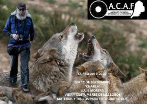 """Fotografiando lobos con Lluis """"Avillop"""" Morera"""